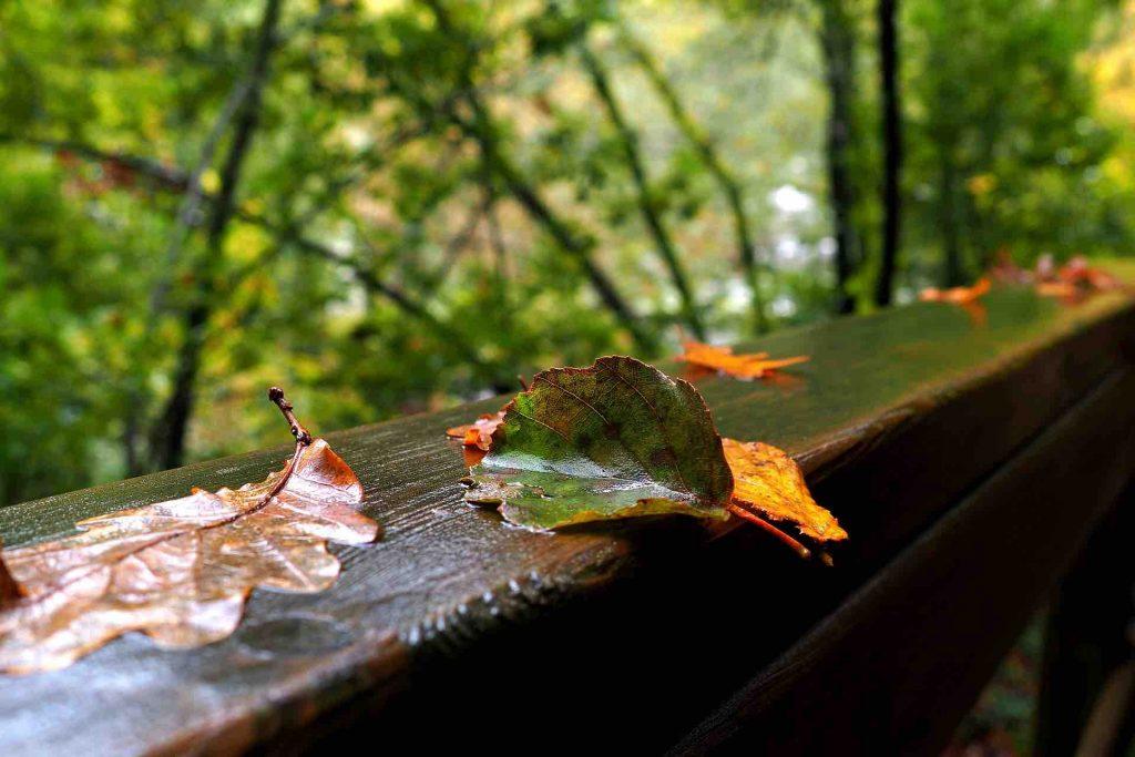Galicia Ribeira Sacra en otoño