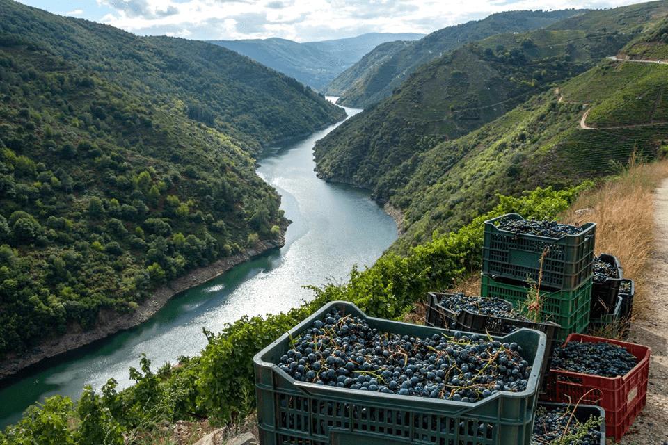 enoturismo Galicia vinos Ribeira Sacra
